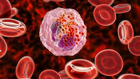 An eosinophil white blood cell