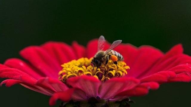 Bee Flower Pixabay