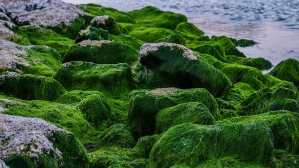 Algae health