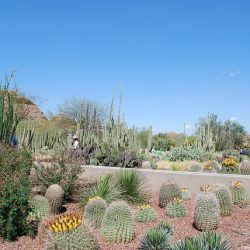 Things To Do With Kids in Phoenix