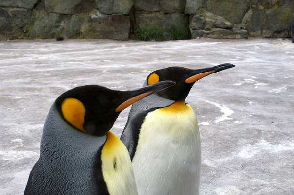 Penguin algorithm