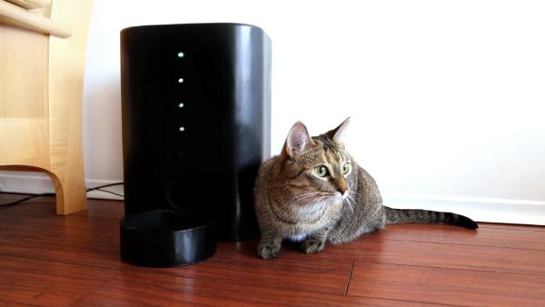 Cat_Nibbles1