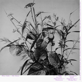 Album artwork for Flower Studies