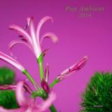 Pop Ambient 2014