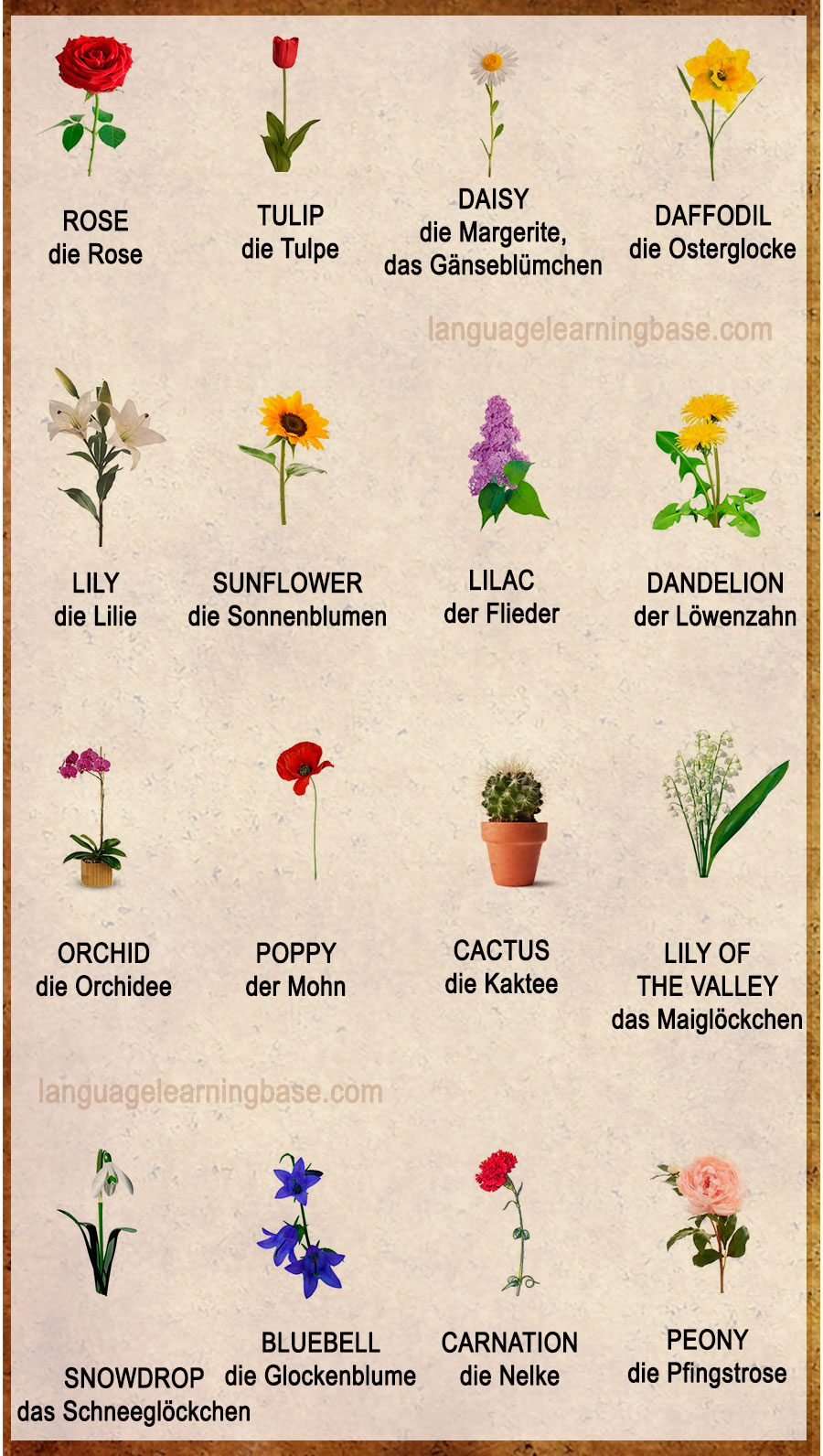 Flowers Vocabulary Word List Learn Germanvocabularygerman