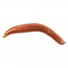 Gulp! Pinched Crawler by Berkley