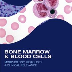 Bone Marrow & Blood Cells: Morphology, Histology & Clinical Relevance Cover Image
