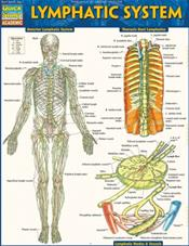 Lymphatic System Laminated Reference Guide Cover Image