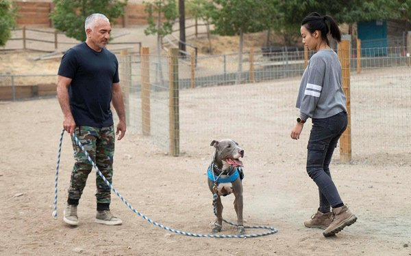 Cesar Millan's Understanding Of Dogs Is Wondrous To Behold