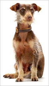 Weego-Budweiser-dog