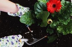Flowers-Planting