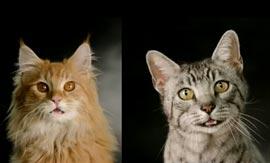 Cats-Meowmix-