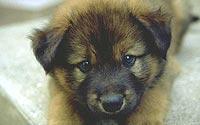 Puppy-A4