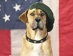 Dog-in-Beret