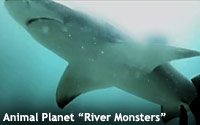 Animal-Planet-River-monsters