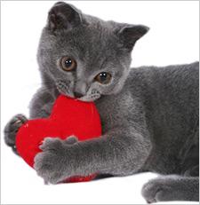 CatRed-Heart-Shutterstock-B