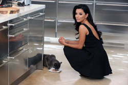 Eva-Longoria-Sheba-cat-food-B