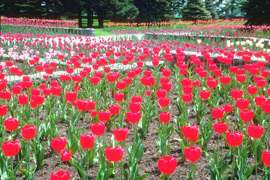 Garden-Flowers-B