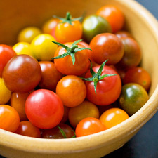 Tomatoes-B