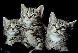Kittens-B