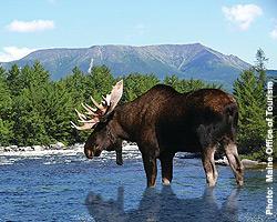 Moose-B
