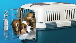 InCabin-Papillon-PetSafe