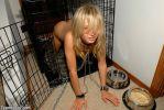 Master looking for pets - Thumbnail