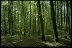 Woods - Thumbnail
