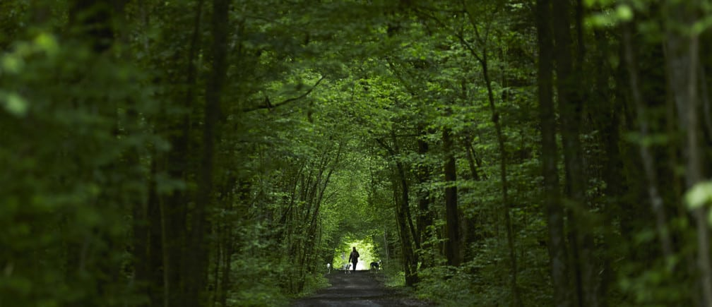 person walking in the forest