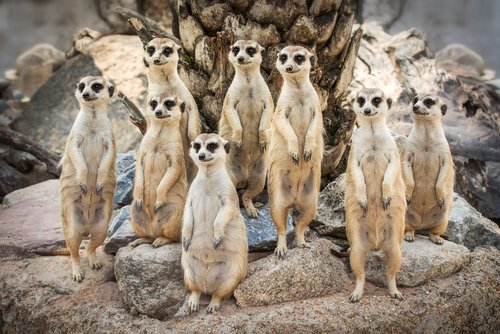 Journalists have used Meerkat over 2,000 times: an inside look at the app's creative launch strategy