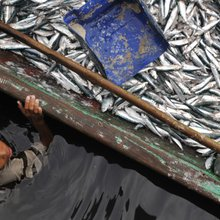 How $50 billion can be found in fishing -- if the world does it better