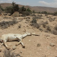 Hyenas Attack Starving Women As Drought Hits