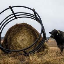 Texas' rural roots and urban future are on a high-speed collision course over a bullet train | Bu...