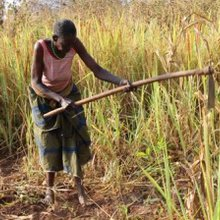 Women farmers use ICT to improve farming in Northern Uganda