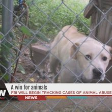 FBI will begin tracking animal cruelty cases in Kansas, Missouri