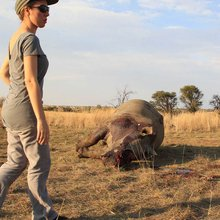 Rhino poaching: After the killing