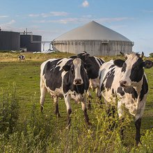 Why it pays to feed in to anaerobic digestion