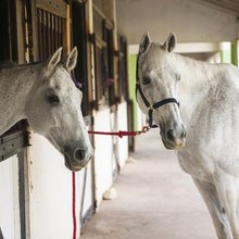 How mastering horse whispering in Jamaica could help you in business meetings