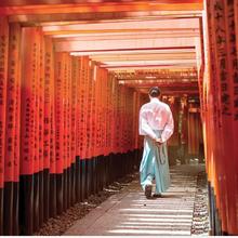 Kyoto in Cherry Blossom Season