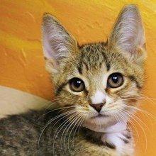Opening a cat café requires purr-suasion