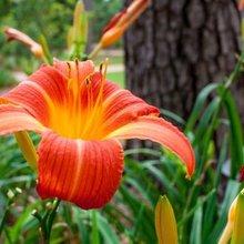 Summer tips for home gardeners
