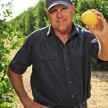 Feeling the squeeze: Lemon industry fights for survival