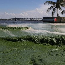 Toxic algal blooms in Florida: Ag leaders need to act now