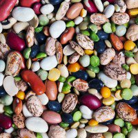 In a World of Protein, There's More to Eat Than Meat