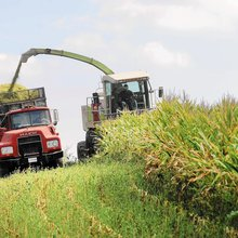 Carroll County farmers enroll more than 40K acres in cover crops