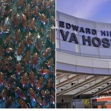 Whistleblower: Cockroaches served in food at Chicago-area VA hospital