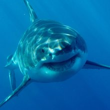 Will Shark Week Get Back to Reality This Year?