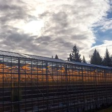 5 Surprising Things Gardeners Can Learn From Iceland's Greenhouses