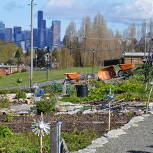 Beacon Hill's Food Forest Seeding Change in the World