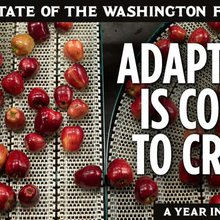 In Washington's apple country, small and midsize farmers must adapt to changing economics, consum...